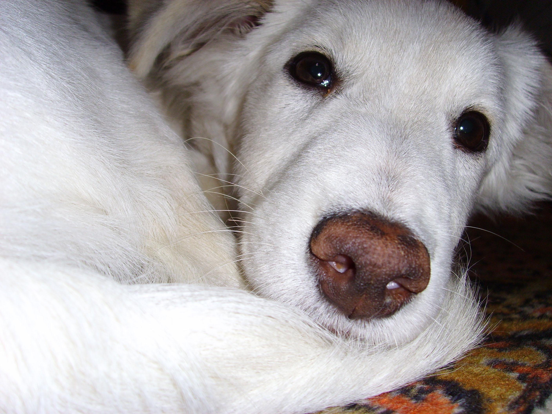 Декабрь. Занятие по арт-терапии «В ожидании собаки»